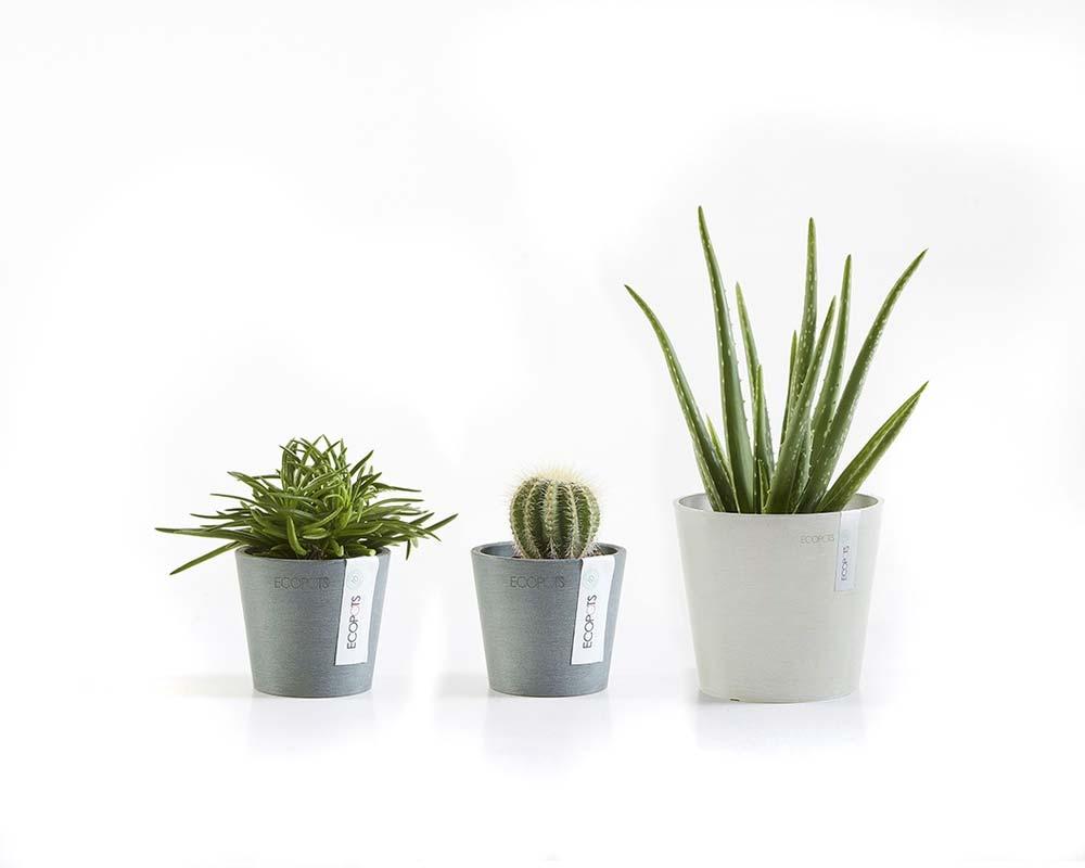 Variety - Amsterdam Mini Succulent Pot - EcoPots