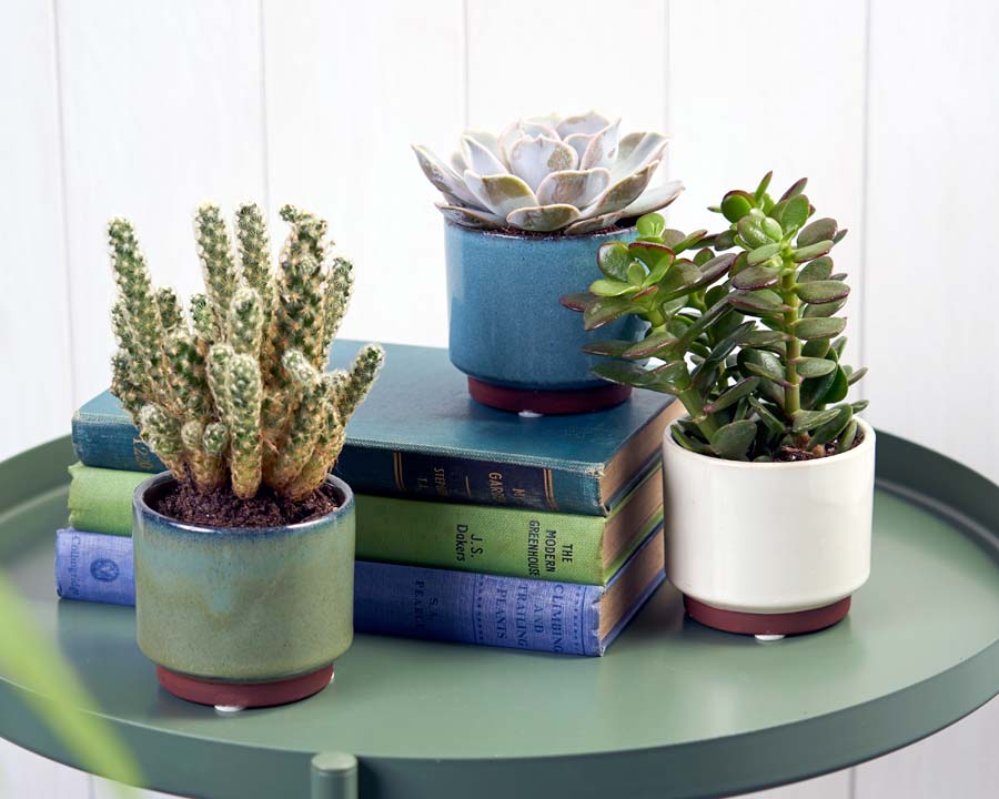 Malibu Succulent Pots in 3 colours - Blue, Green and Cream by Burgon and Ball