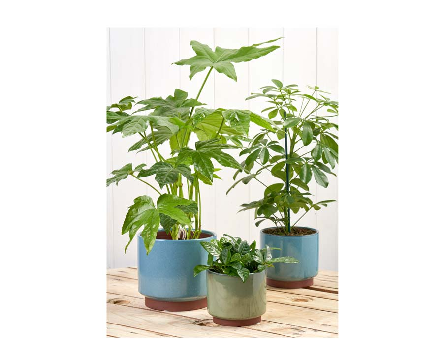 Burgon and Ball's latest glazed pots available in 3 sizes XL, L and M