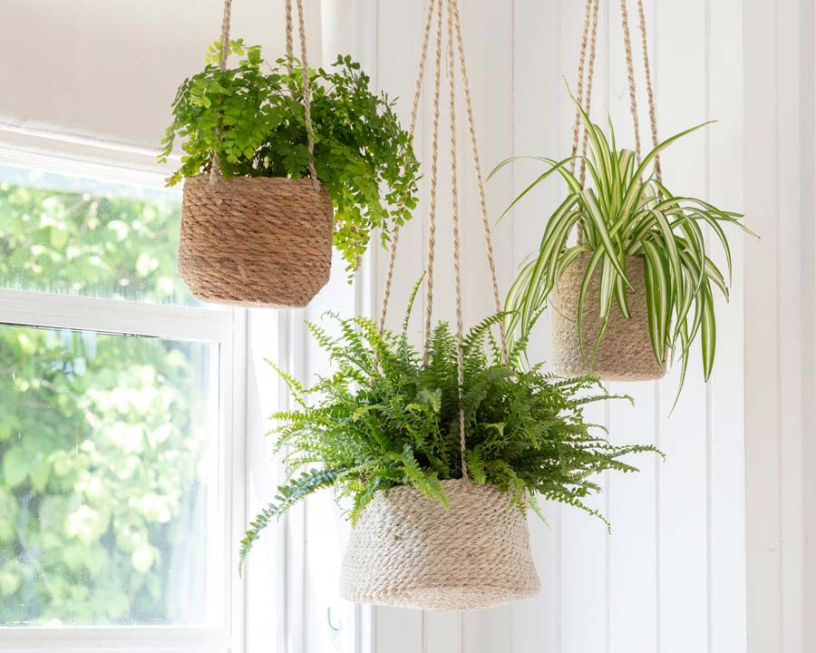 The range of hanging plant pots - tapered and tall made from jute whilst the short pot is made of seagrass