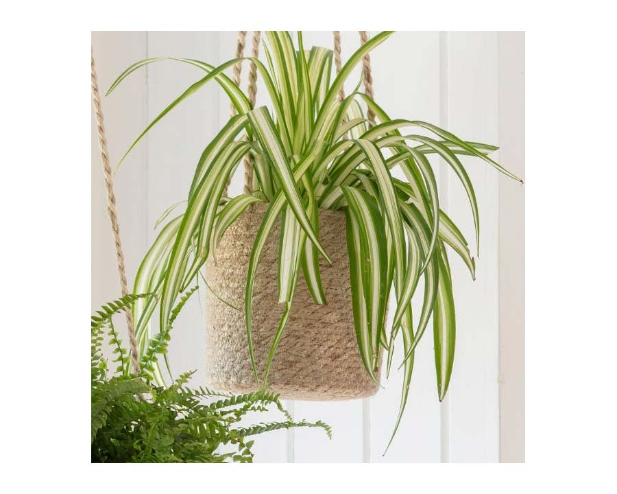 Hanging pot - tall design is hand woven from jute with jute hanging ties