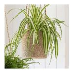 Hanging Plant Pot - Tall