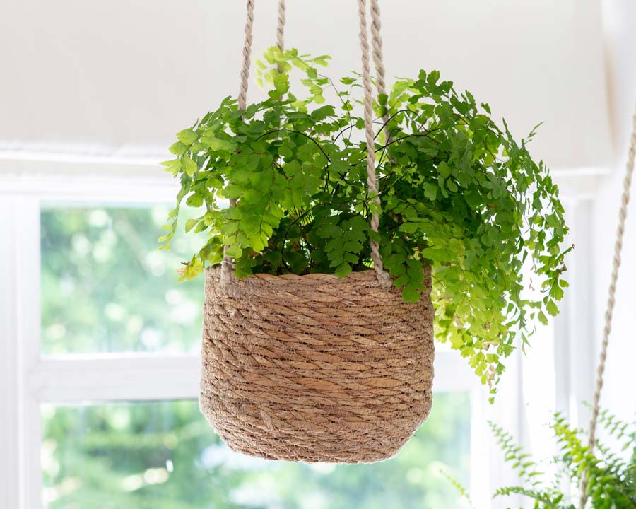 Hanging pot made from Seagrass
