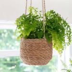 Hanging Plant Pot - Short