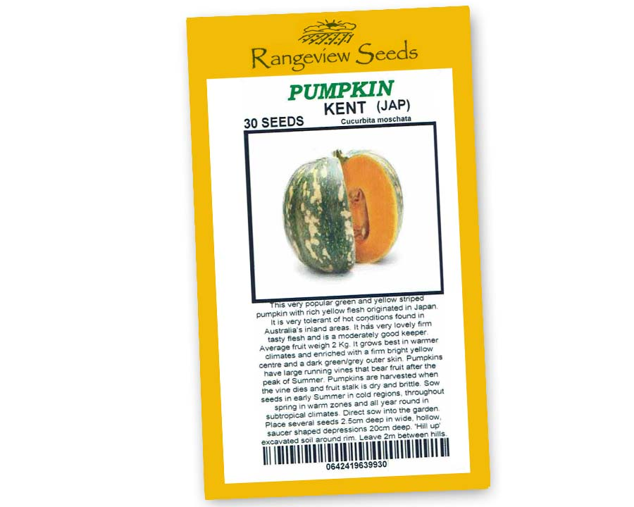 Pumpkin Kent - Rangeview Seeds