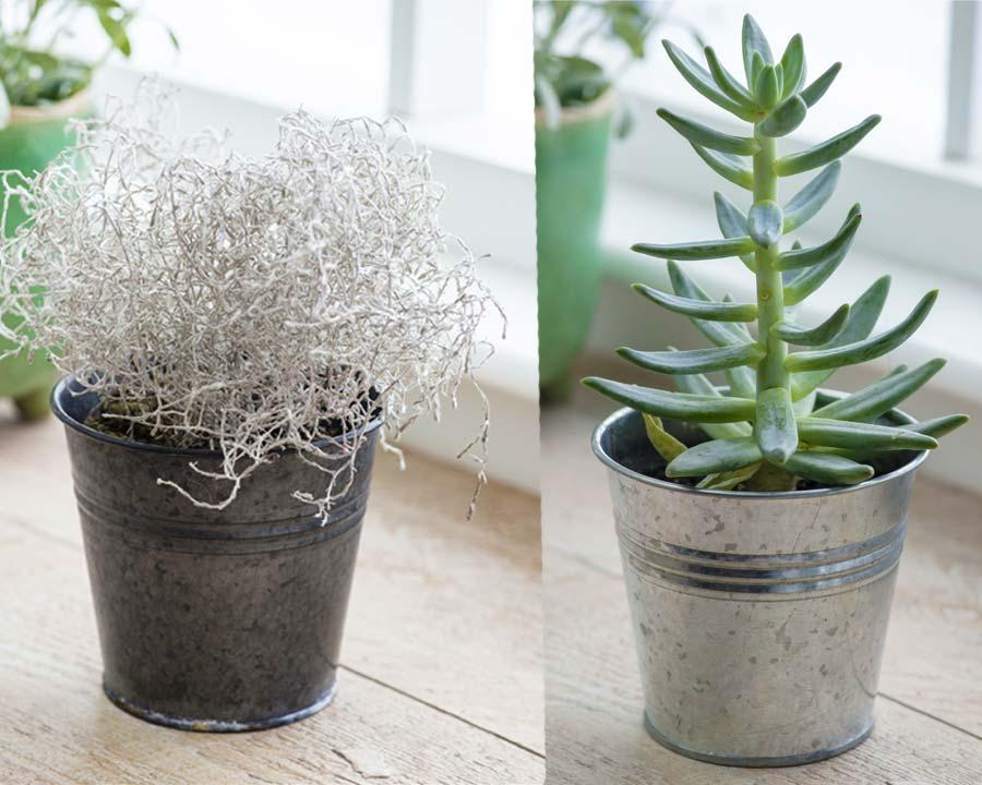 Winson Plant Pots - Burgon & Ball