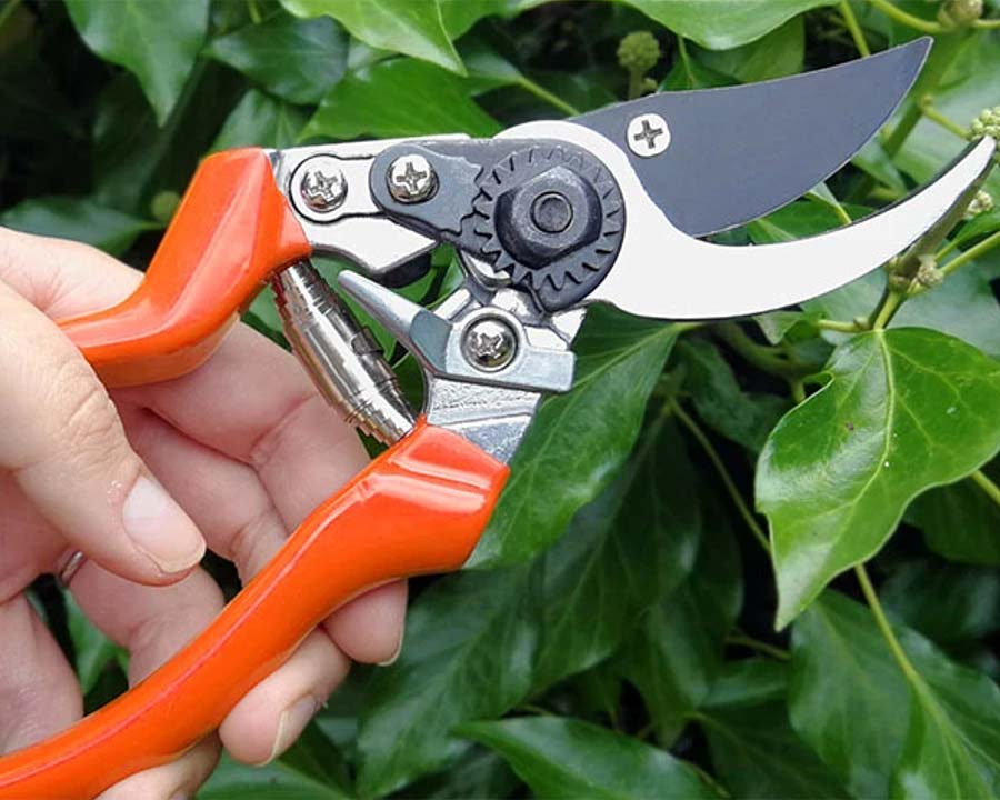 Left-handed Bypass Secateurs - RHS Endorsed - Burgon & Ball