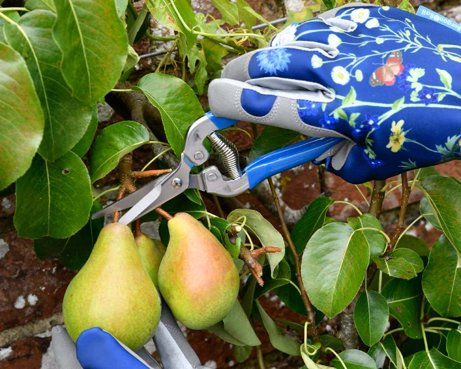 Garden Snips - part of the Burgon and Ball British Meadow range of garden tools and accessories