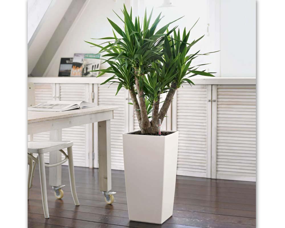 White - Cubico Color 30 - Self-Watering Pot - Lechuza
