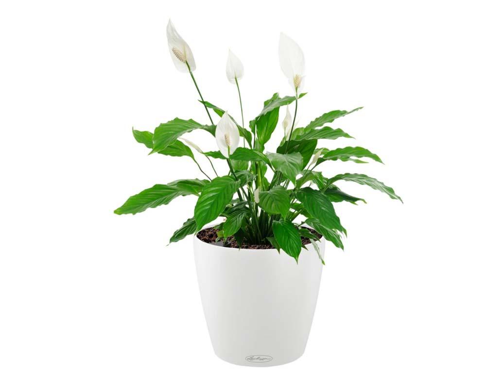 White - Classico Color 18 - Self-Watering Pot - Lechuza