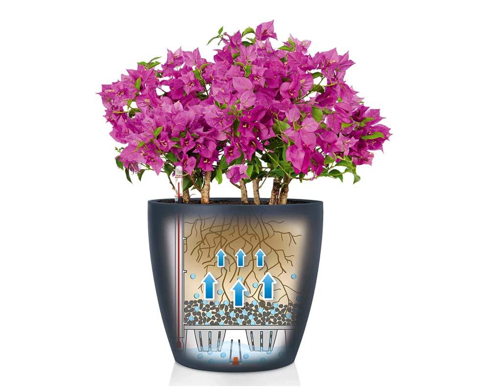 Slate - Classico Color 21 - Self-Watering Pot - Lechuza