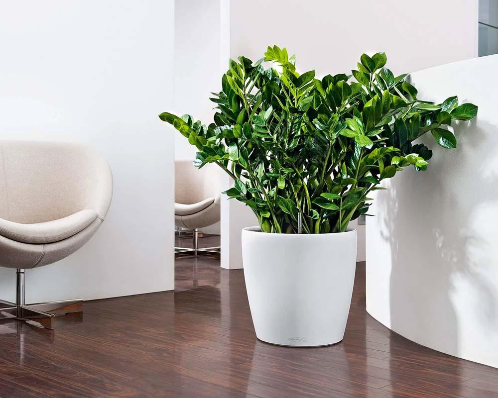 White - Classico Color 35 - Self-Watering Pot - Lechuza