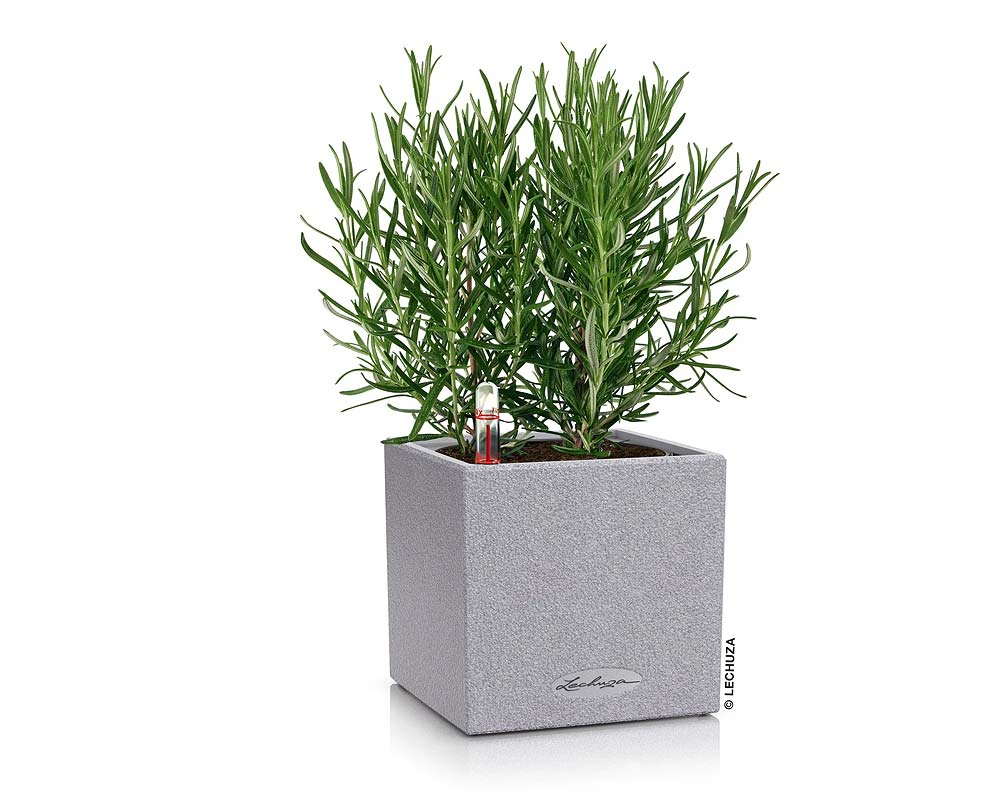 Stone Gray - Canto Stone 14 Cube - Self-Watering Pot - Lechuza