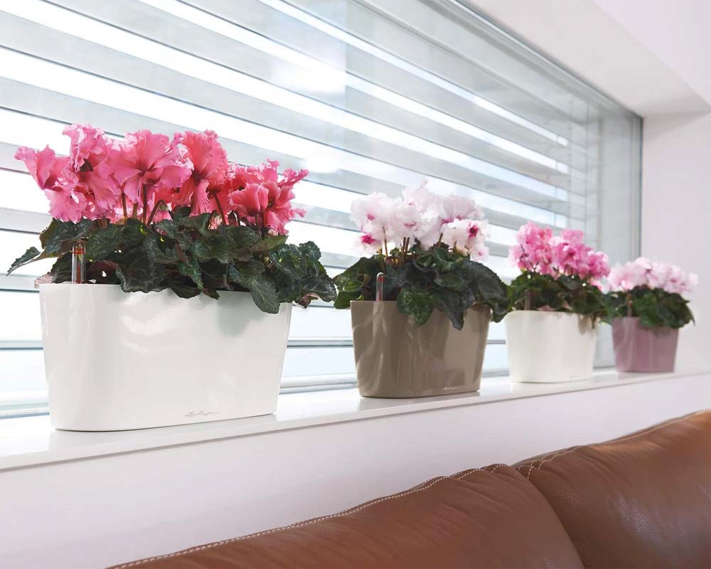 Inside Display - Delta 10 Self-Watering Pot - Lechuza