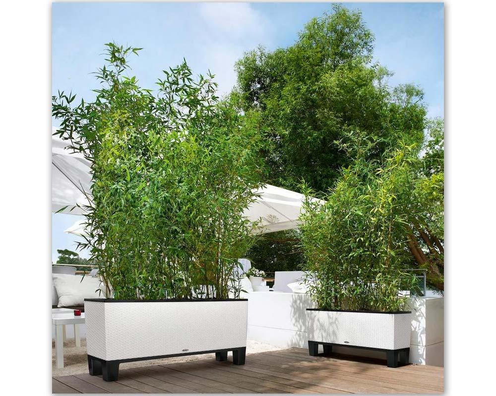 White -Trio Cottage 40 - Self-Watering Planter - Lechuza