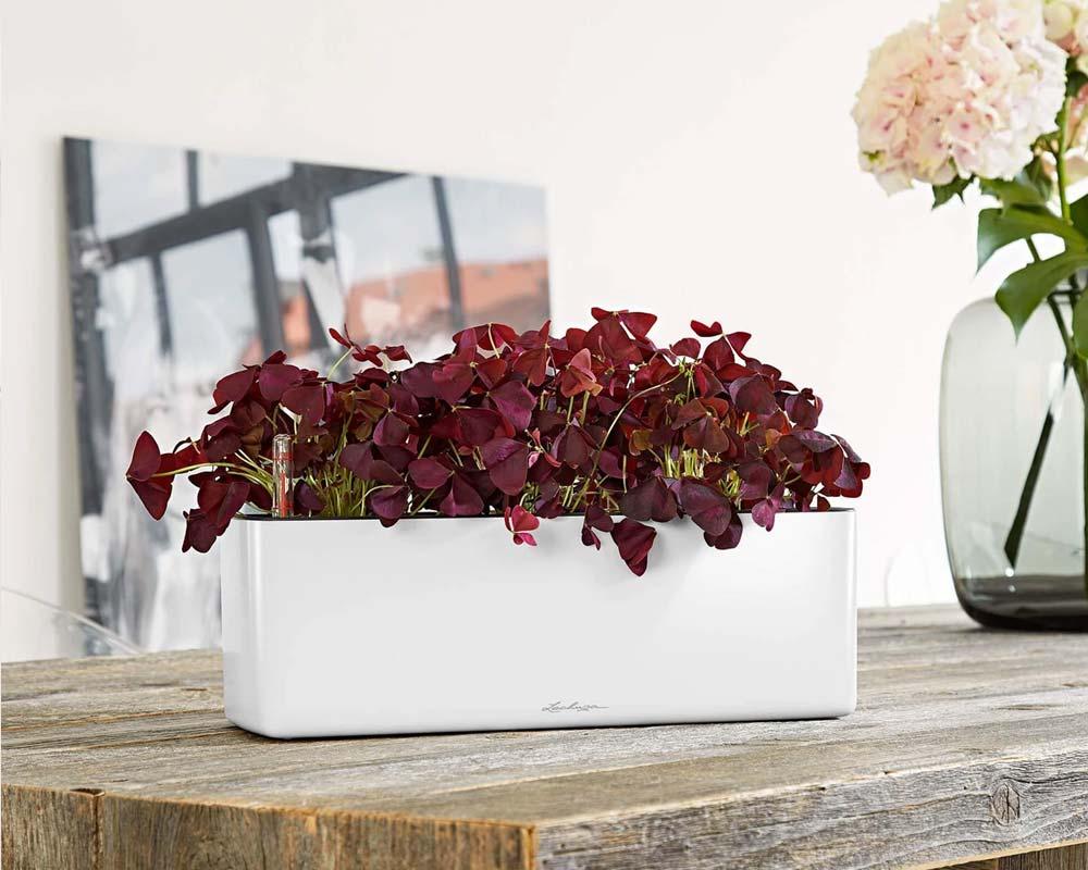 High Gloss White - Glossy Cube Triple - Self-Watering Pot - Lechuza