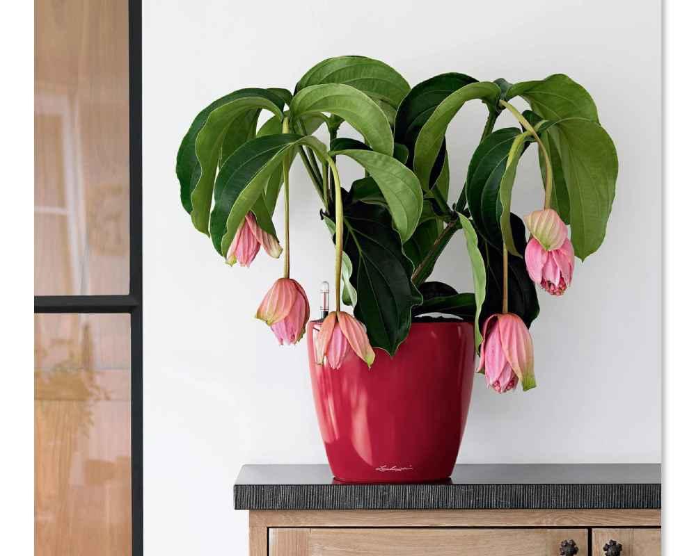 Classico LS 21 Premium Self-Watering Pot - High Gloss Scarlet Red - Lechuza