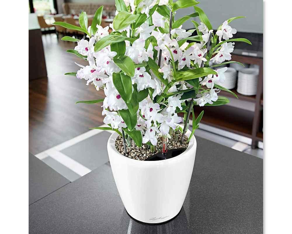 Classico LS 21 Premium Self-Watering Pot - High Gloss White - Lechuza