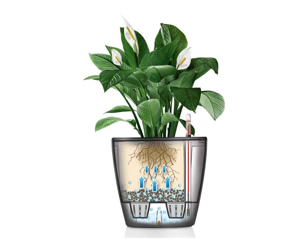 Classico LS 21 Premium Self-Watering Pot - How it Works Diagram - Lechuza