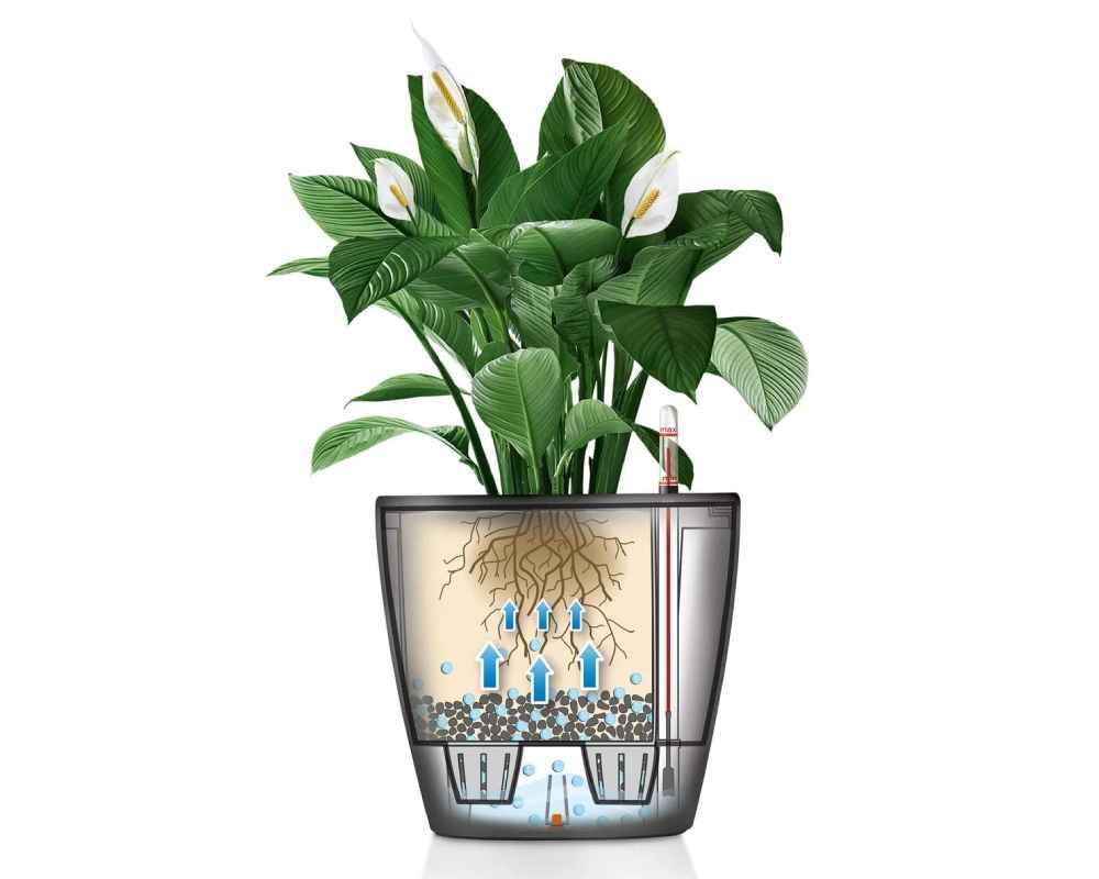 Classico LS 28 Premium Self-Watering Pot - How it Works Diagram - Lechuza