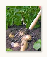 Potato Harvesting Scoop - Burgon & Ball