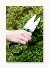 Topiary Trimming Shears - Burgon & Ball