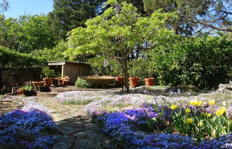 Carpet of mauve-pink alphine phlox - Stenstone Garden - Leura Gardens Festival