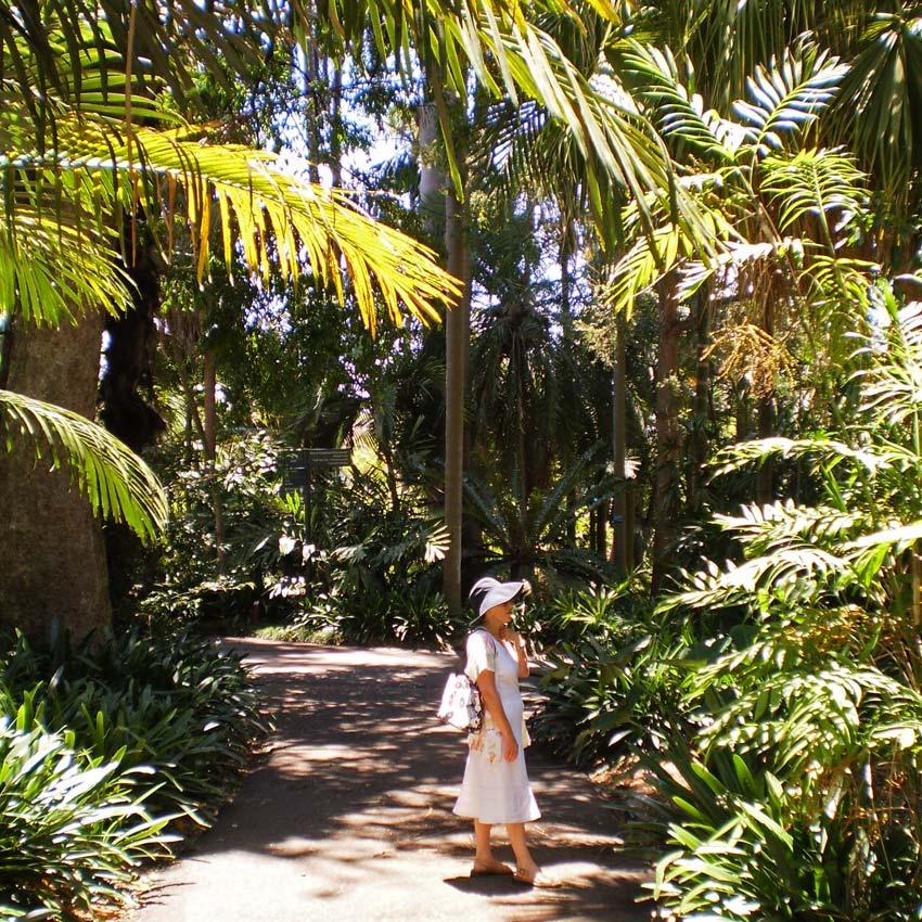 Many wonderfully shady pathways - Royal Botanic Garden, Sydney