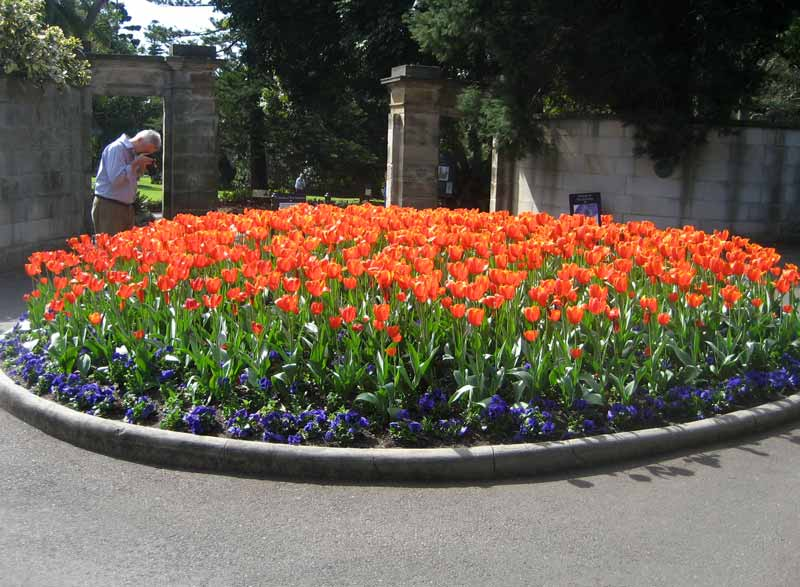 Royal Botanic Garden, Sydney are always full of colour - August is a great time to see the tulips