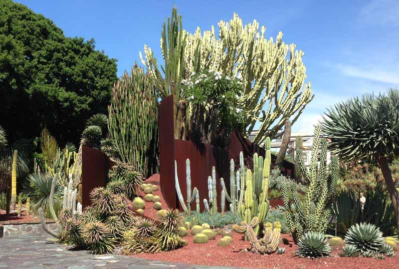 Succulent Garden   Royal Botanic Garden, Sydney