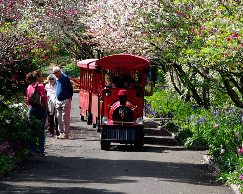Scenic train will take visitors around Royal Botanic Garden, Sydney - September