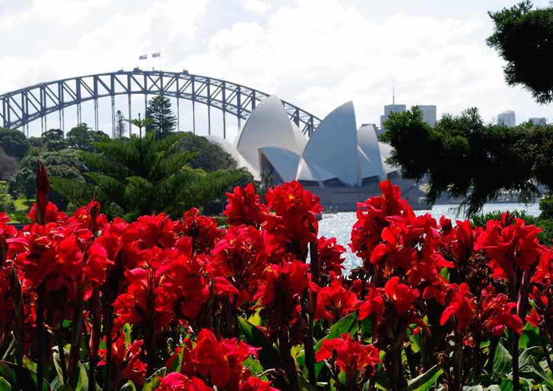 View Opera House from Royal Botanic Garden Sydney in September