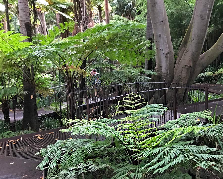 Fern Gully -The raised path allows visitors enjoy ferns without disturbing the undergrowth