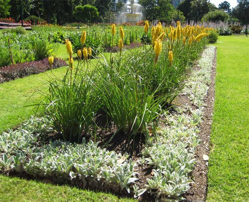 Excellent flower bed displays - Royal Botanic Gardens Melbourne