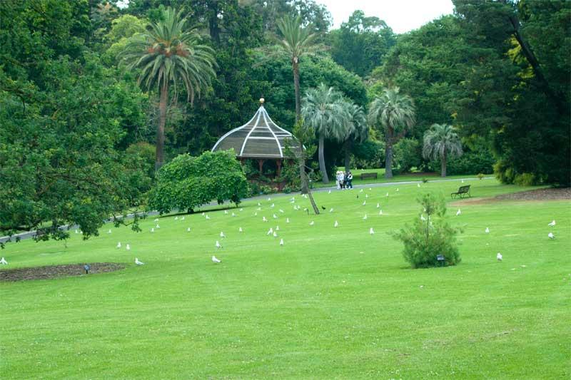 Very elegant, very Melbourne. - Royal Botanic Gardens Melbourne