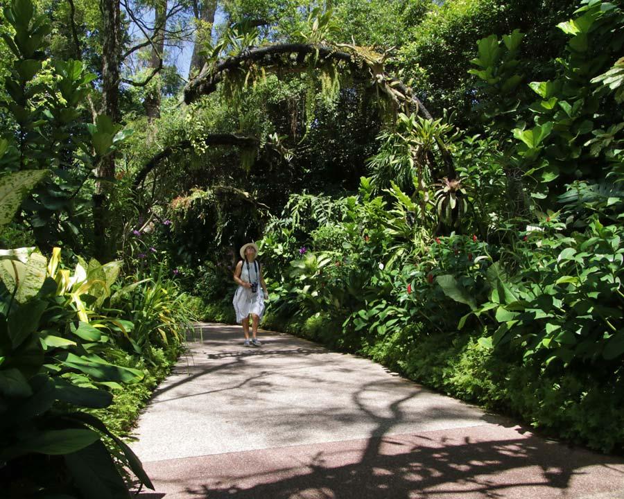 Singapore Botanic Gardens - very lush