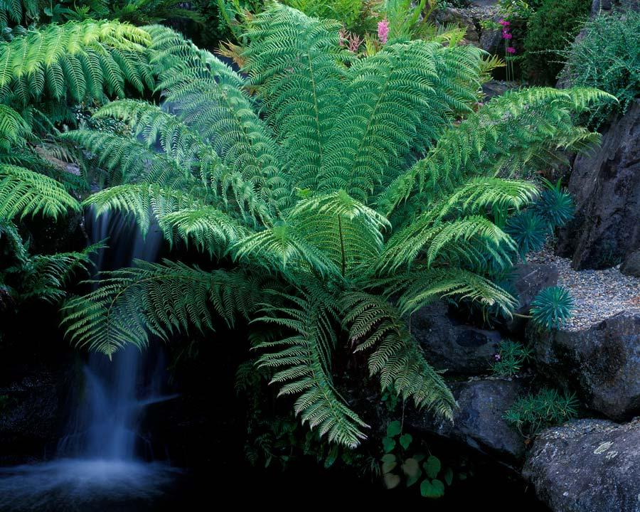 Waterfall - Blue Mountain Botanic Garden Mount Tomah