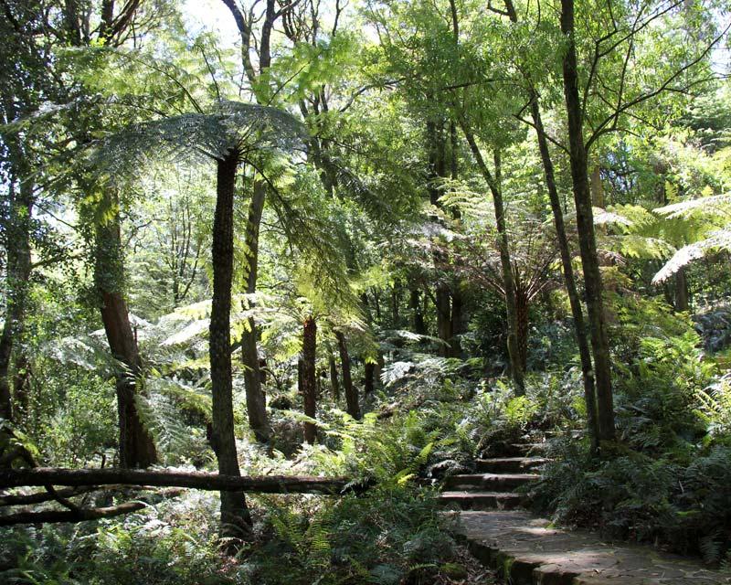 Remnant Rainforest - Blue Mountains Botanic Garden Mount Tomah