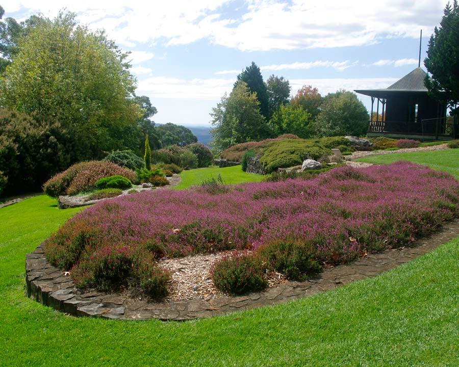 Heath Garden - Mount Tomah
