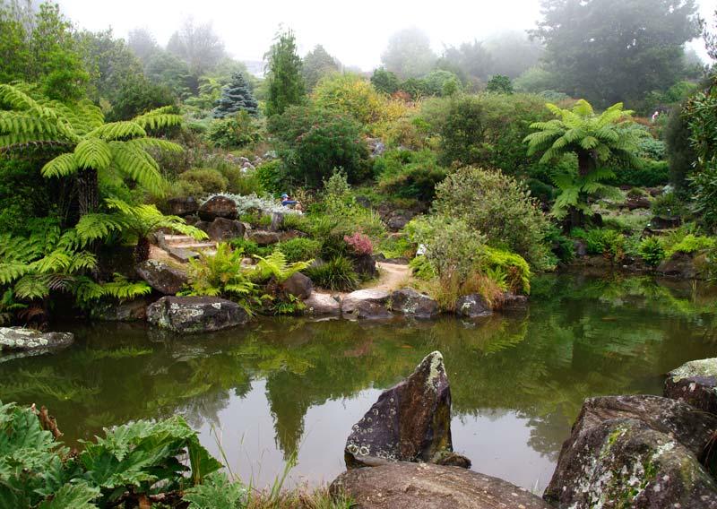 Mist over lake - early spring morning Blue Mountains Botanic Garden Mount Tomah