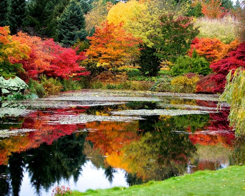 ... Wild Autumn Colour   Supplied By VanDusen   Photographer Raymond Chan  ...