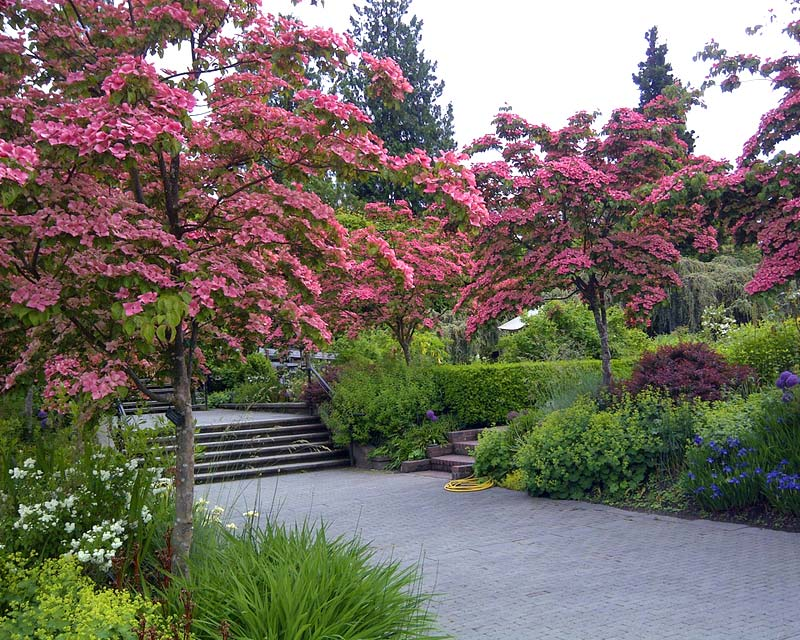Gardensonline Vandusen Botanical Garden Gardens Of The World