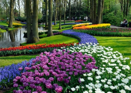 Gardensonline keukenhof gardens gardens of the world bulbs at their very best the ultimate location photos supplied by keukenhof sisterspd