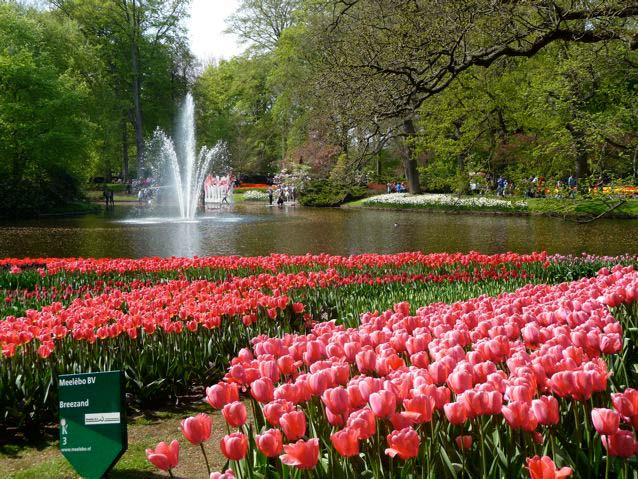 Gardensonline keukenhof gardens gardens of the world wonderful displays of flowers from the paths to the lake photo barbara cant sisterspd