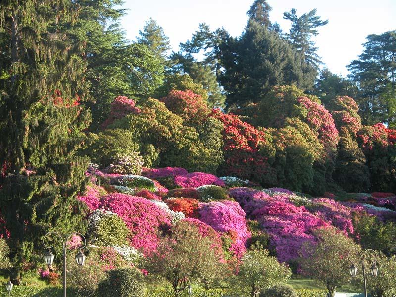 Gardens - image supplied by Villa Carlotta