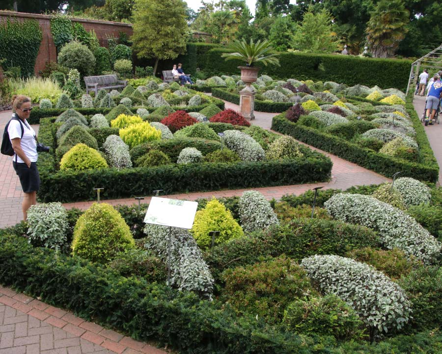 Testing buxus alternatives for low hedging