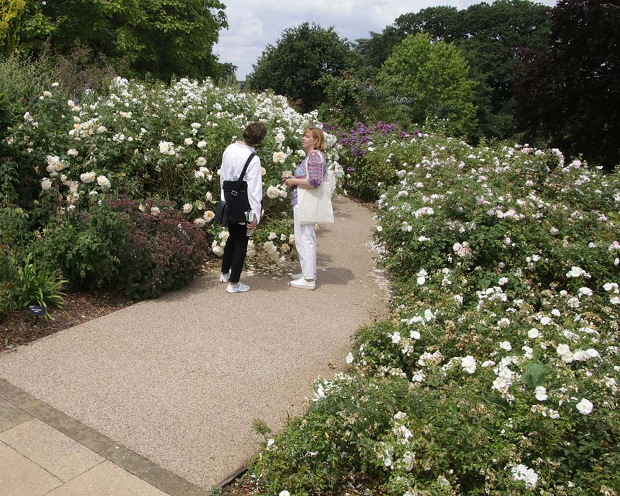 The Rose Garden at Wisley