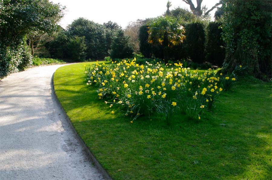 Spring flowers in abundance, Lost Gardens of Heligan