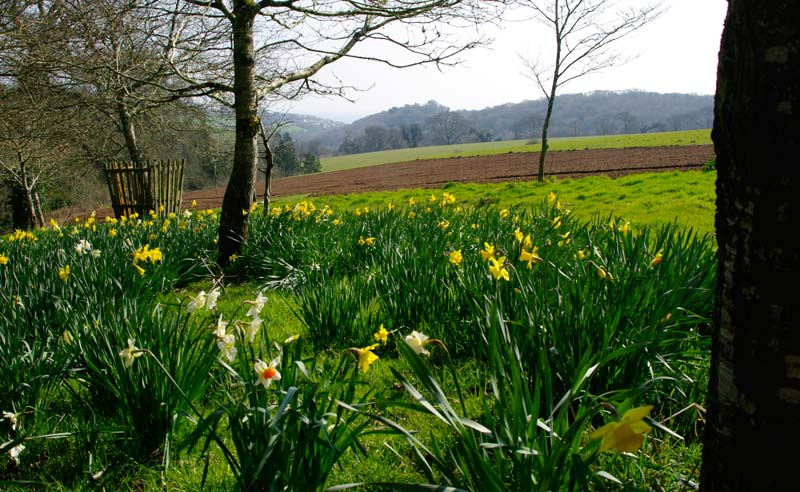 Spring view across West Lawn, Lost Gardens of Heligan