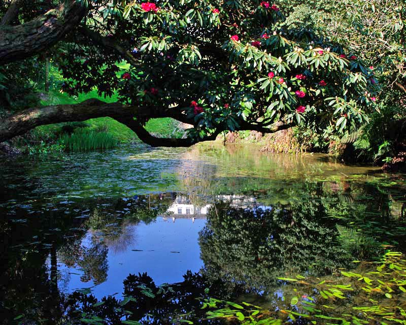 Looking back towards the house from the top pond, Lost Gardens of Heligan
